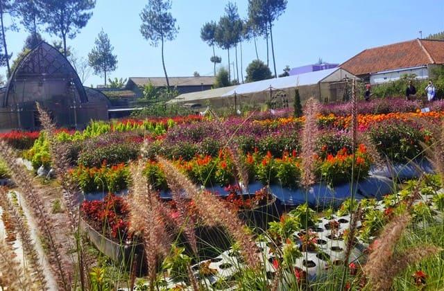 Taman bunga Cihideung, kamu suka bunga dengan warna-warna yang indah? Jika kamu menyukainya, kunjungi taman ini